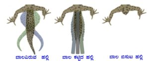lizardtail